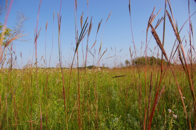 Tall grass prairie 2