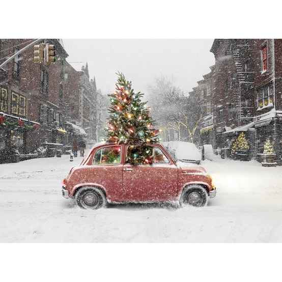 Christmas Tree in Small Car