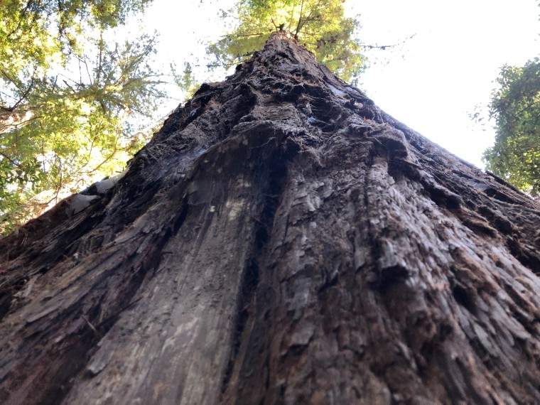 Redwood vertical